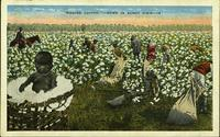 """Picking Cotton,"" - Down in Sunny Dixie"